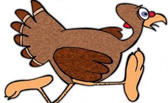 1-turkey-run